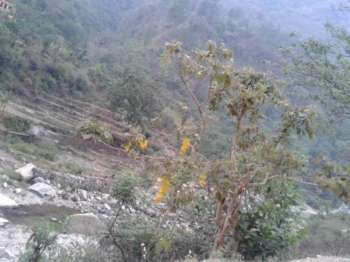 Haridwar Trip 2015 (26)